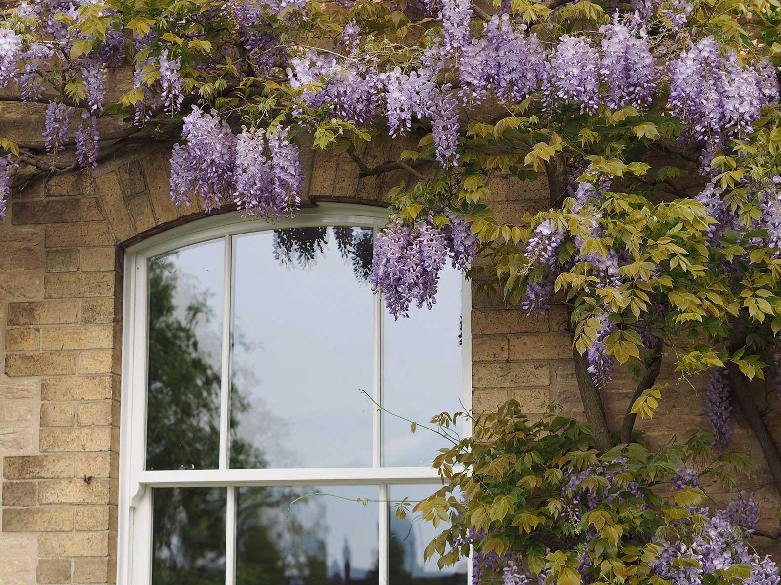 uPVC Sash Window Designs Thornbury